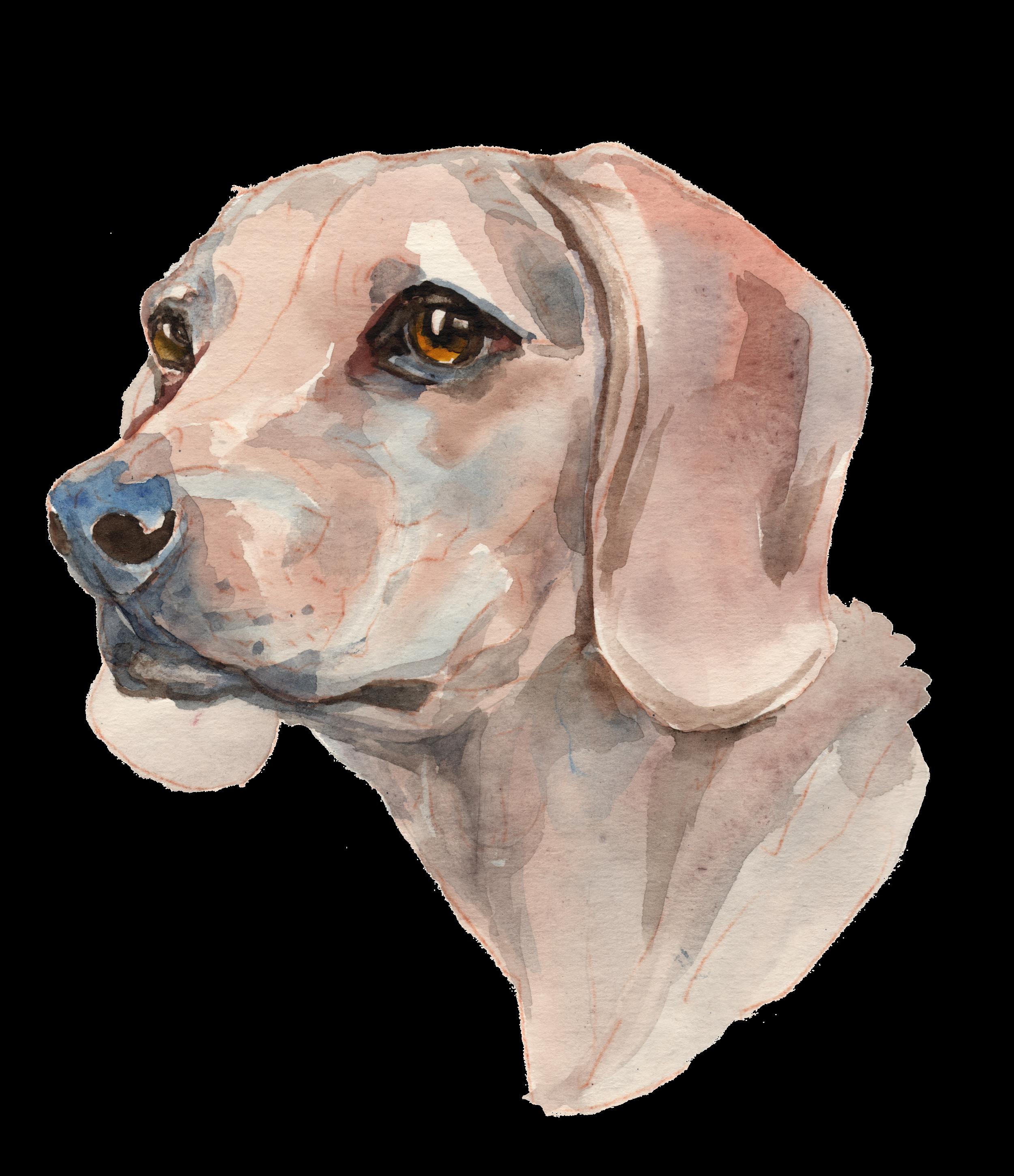 Dog_Full